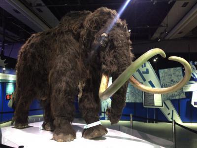 日本科学未来館「マンモス展」に行ってきた