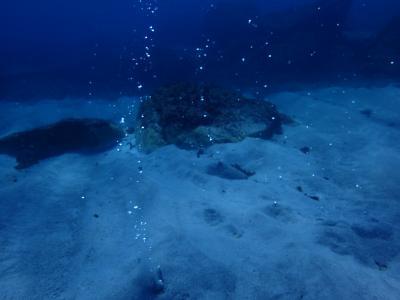 初夏の式根島ダイビング