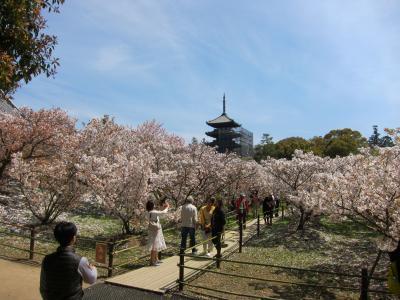 【3】春うらら*仁和寺の御室桜と完全予約のうな重*春爛漫の日本へ里帰り 6日目