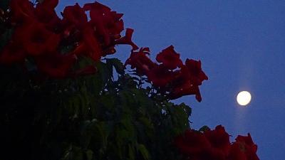 早朝散歩 鴻池第一公園の日の出の撮影できず、北野・荒巻南地区から帰宅 その1。