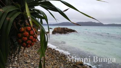初の奄美大島2泊3日は雨だった~ばしゃ山村、コーラルパームス&ネイティブシーアダンオンザビーチ宿泊編