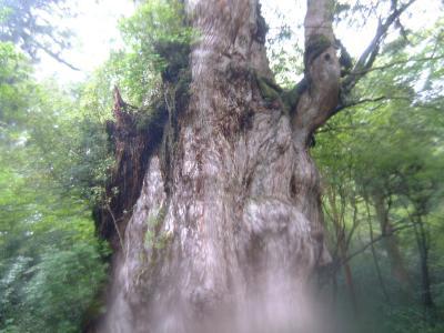 世界自然遺産・大雨の屋久島を巡る