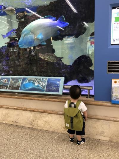 1年ぶりの沖縄