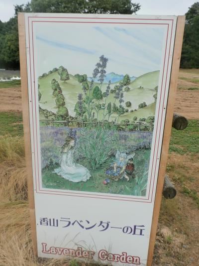 せら高原、香山ラベンダーの丘へ行ってきました(#^^#)in広島県 世羅町