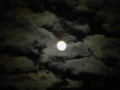 満月の夜のクッチャロ湖とハクチョウさん!