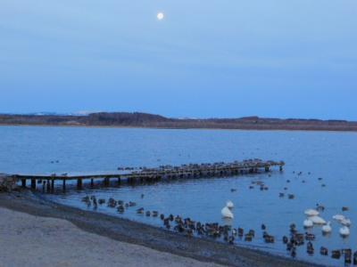 早朝のクッチャロ湖!