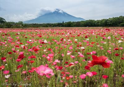山中湖ロッジ滞在記6月編 ~花と富士山~