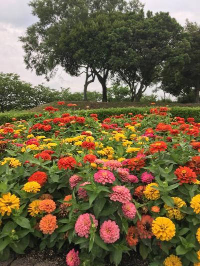 岡山☆愛犬と風車と花を見に行きました