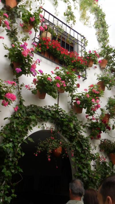 アンダルシアの春祭りから銀の道、そして巡礼の道を歩く 3 2日目① コルドバのパティオ祭り①
