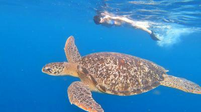 海亀の楽園 ギリ島の旅