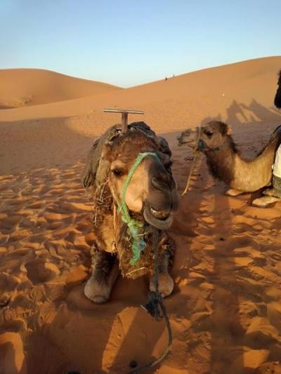 えぇ?・・・ラマダン中のモロッコ10日間 4