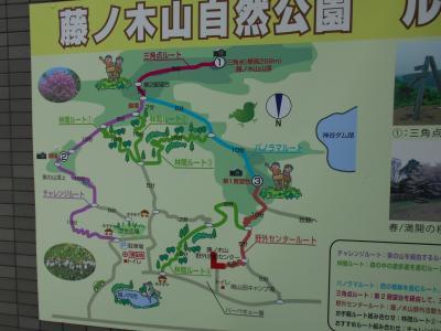 藤の木山自然公園の自然観察