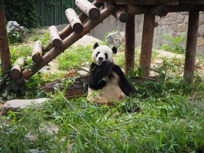你好!北京で遊んできたよ 3
