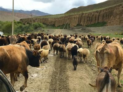 キルギスの大自然からサマルカンドの碧の世界へ、中央アジアの旅【4】イシククル湖南岸からソンクル湖への道(超ワイルド!ドライブ編/キルギス)