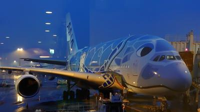 ANAエアバスA380フライングホヌ〜成田空港45番搭乗口から撮影♪