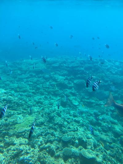 沖縄3日目☆ジンベエザメと青の洞窟でシュノーケリング