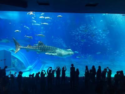 沖縄2日目☆美ら海水族館と古宇利大橋とクマノミ号