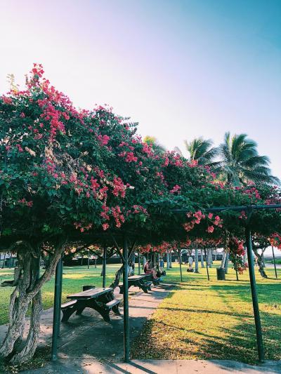 【初ハワイ】④富裕層に紛れて年越しハワイ女子旅/ホノルル美術館でアートに触れる1日編