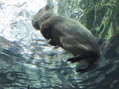 栃木・那須烏山でそば・温泉からの水族館へ②~淡水魚の水族館、なかがわ水遊園~