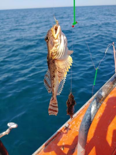 船上釣りなど