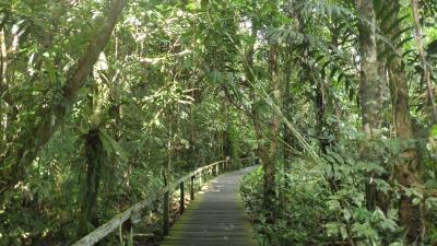 2019年ボルネオ旅行 グヌン・ムル国立公園