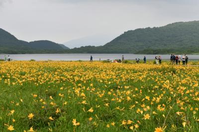 リベンジ:ニッコウキスゲの雄国沼