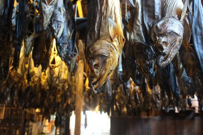 忘れものを探しに新潟へ~天井いっぱいの鮭!イチバンの夕日!笹川流れは海!~村上編