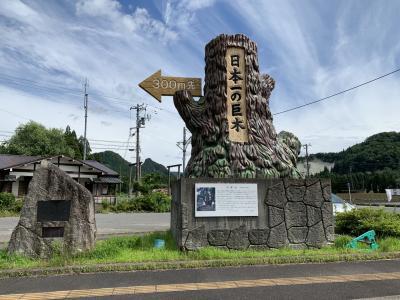 新潟県にあの屋久杉超える日本一の巨木がある!!