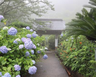 大多喜.市原散策・・麻綿原高原に2万株の紫陽花が咲き誇る妙法生寺を訪ねます。