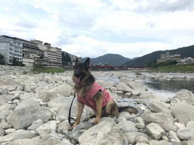愛犬と旅する下呂の旅