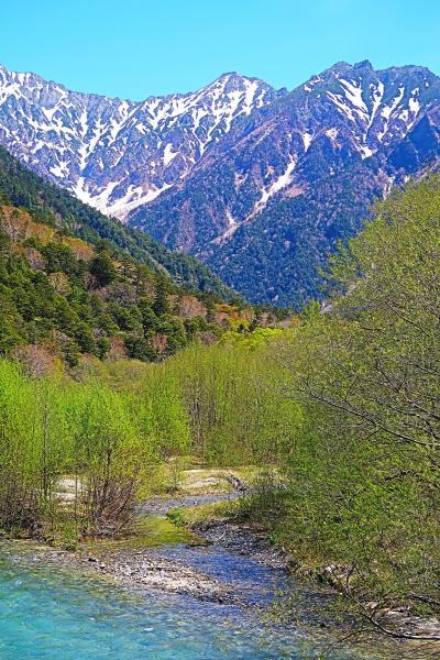 信州令和41 上高地f 中の瀬園地あたり 休憩所として最適 ☆ニリンソウの花咲くころ