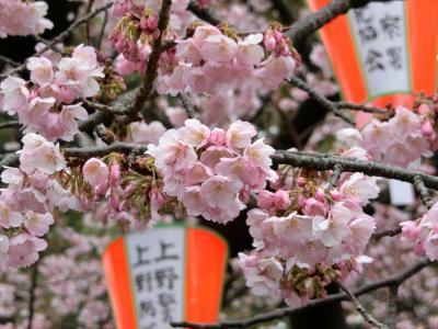 東京('19.3月)