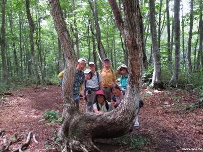 2019夏の花旅(1)白馬岩岳 ねずこの森自然探勝路