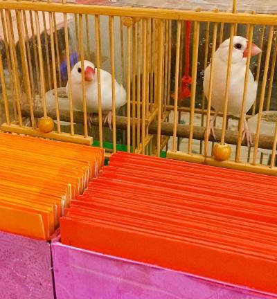 台北へ 3世代家族旅行 2日目後編 初めての鳥占い