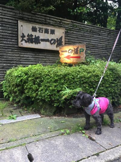 ワンコと一緒旅2019★仙石高原大箱根一の湯へ