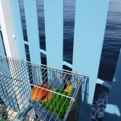 2019初夏・北海道行商旅・太平洋フェリーの新造船と、ペットルーム初体験