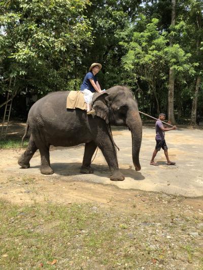 ネゴンボからヌワラエリヤまでの道中で(象とスパイス)