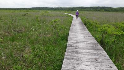 道東6月・標津湿原の木道を自転車で駆け抜けて・・