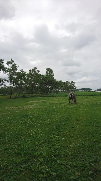 201907,また曇り空,箱根牧場の猫ちゃん,牛小屋のアイス