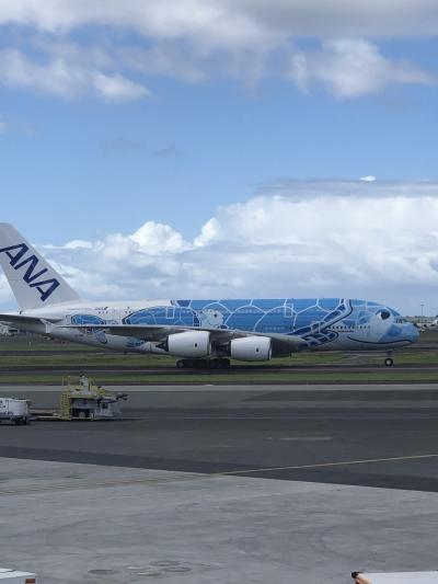 大韓航空ビジネスクラス、ハワイヒルトングランドワイキキアンペントハウスと、カハラホテルの男3人、女2人、食い倒れのハワイ旅