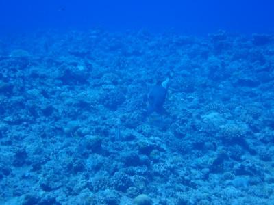 夏!沖縄  慶良間諸島ナガンヌ北 ダイビングツアーに参加しました。