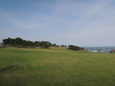 芝生の海岸