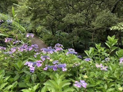 ぬかた園地、満開のあじさい園に行ってきました