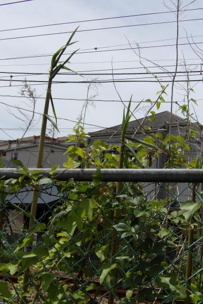 町田堀緑地