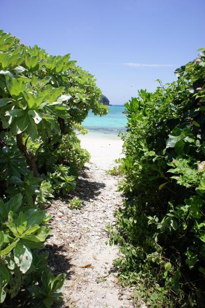 世界が恋する海、慶良間諸島・阿嘉島で泊まって遊んで飲んできました。