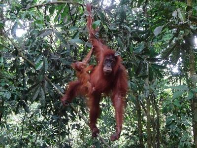 グヌン・ルセル国立公園(スマトラ島:インドネシア) 2019.8.5