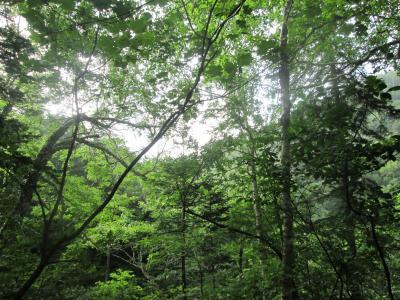 ニングルの森・原始ガ原を歩いたよ