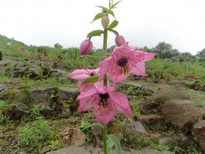 長野に着いて2日目、今日は前から興味のあった五竜高山植物園に♪