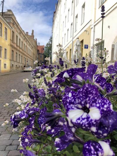 夏のフィンランドひとり旅☆3日目エストニア