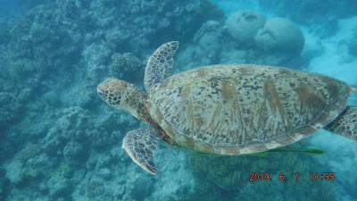 ケアンズから50K離れ世界遺産のサンゴ礁と海が見たくて♪